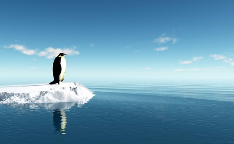 penguin-on-ice
