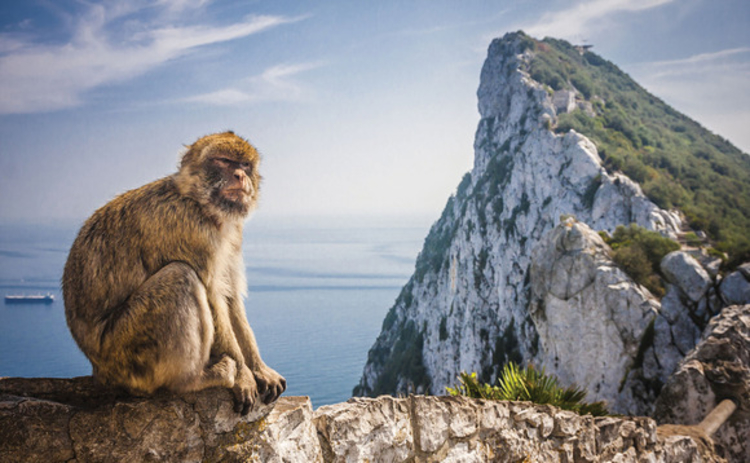 gibraltar-rock-with-barbary-macaque
