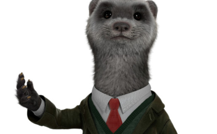 Herve the ferret