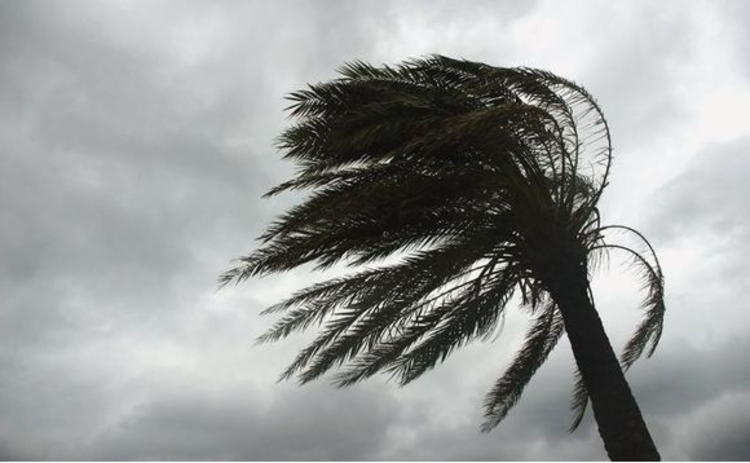 A palm tree yielding in a tropical storm