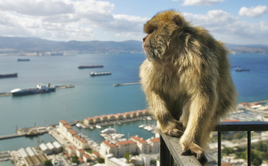 Gibraltar PCCs given permission to write third party ...